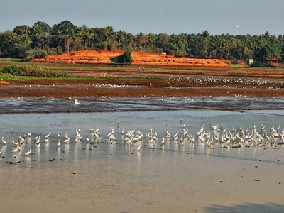 Thrissur Kole Wetlands