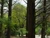 Kobe Municipal Arboretum