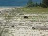 Kucking Wetlands Beach