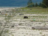Kuching Parque Nacional de Humedales