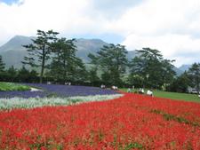 Kujū Flower Gardens And Kujū Mountains