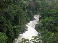 Cross River National Park