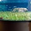 An Aquarium Display At L'Oceanografic