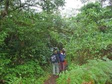 La Fortuna Falls Trail View