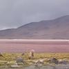 Laguna Colorada Bolivia - Flamingos & Llama