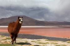 Laguna Colorada - Bolivia