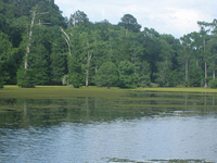 Lake Bistineau