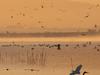Birds On Lake Elsinore