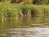 Lake Langdon