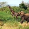 @ Lake Manyara In Tanzania