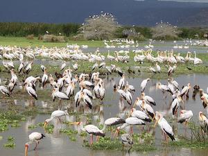 Incredible Tanzania Fotos