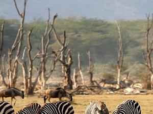 Overnight Safaris in the Manyara/Serengeti/Ngorongoro/Tarangire Photos