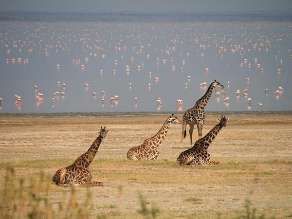 2 Days Tanzania Safari Photos