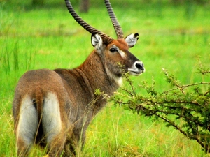 Uganda Safari Package Photos