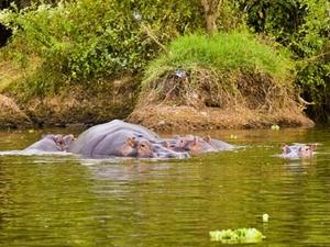 Lake Mburo National Park Fotos