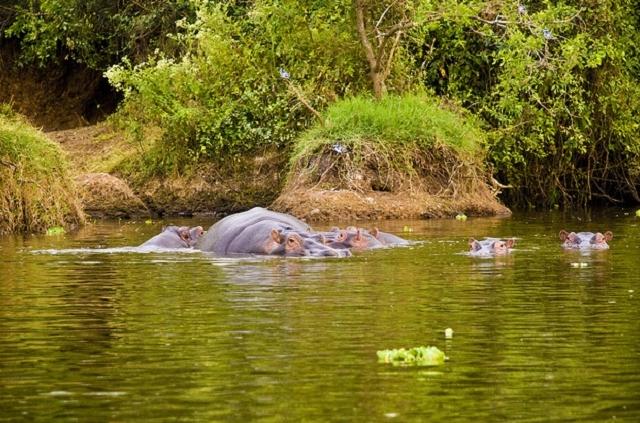 Lake Mburo National Park Photos