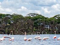 Safari Naivmara