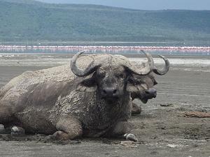 Kenya Lodge Safaris, Tours & Trips