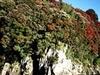 Lake Okataina Scenic Reserve - North Island - New Zealand