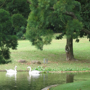 Lake On The Grounds Of The Istana