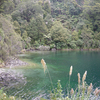 Lake Waikaremoana Flora - Te Urewera