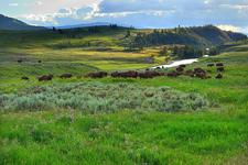 Lamar Valley - River Trail - Yellowstone - USA