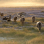 Lamas At Sunset