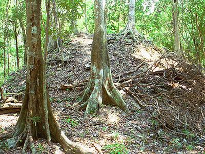 La Milpa Site - Orange Walk District - Belize