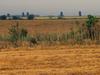 Landscape In Calarasi County