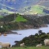 Landscape @ Otago Peninsula - South Island NZ