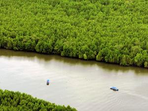 Langkawi Mangroves