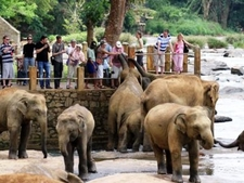 Lanka Tour Managers