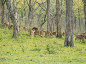 Bandipur National Park Holiday Package Photos