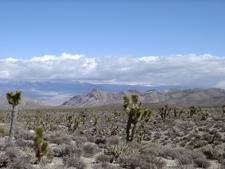 Desert Scene In The Las Vegas Area