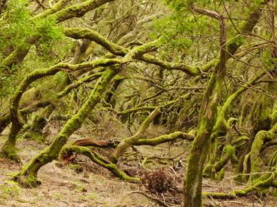 Madeira's Laurisilva Forest