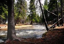 Lava Creek Trail - Yellowstone - USA