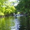 Lawrence Brook