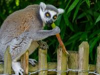 From Lemur Kingdom to Beach Escape