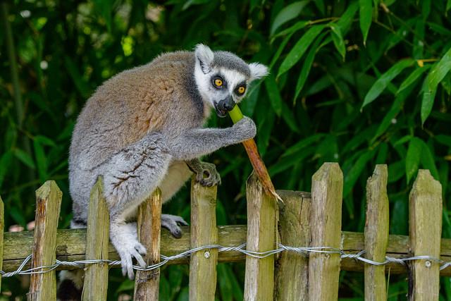 From Lemur Kingdom to Beach Escape Photos