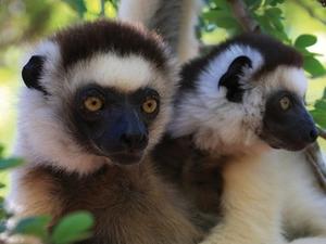 Eastern Madagascar Safari Photos