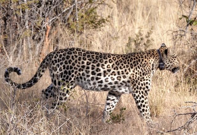Private Guided Luxury Etosha Namibian Safari Tour Photos