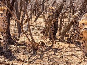 3 Days Come Closer to Wildlife Tour Fotos