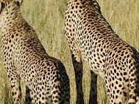 Masai Mara Safari Offers
