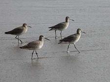 Limantour Beach Wildlife