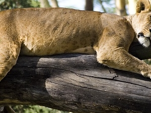 4 Days 3 Nights Lake Nakuru And Masai Mara Safari Photos