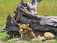 Heroes Day Masai Mara 2 Days 1 Night Treat