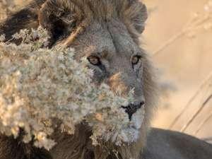 9 Day Botswana Safari Photos