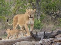The Kruger Park Explorer Safari
