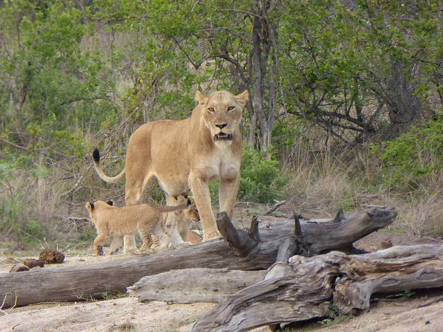 The Kruger Park Explorer Safari Photos