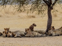 3 Days / 2 Nights Classic Maasai Mara